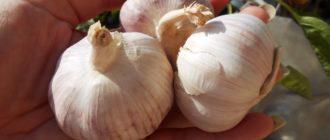 75a41d29996633e8840d9546284d1a7a 330x140 - Три проверенных подкормки чеснока весной и летом для большой урожайности