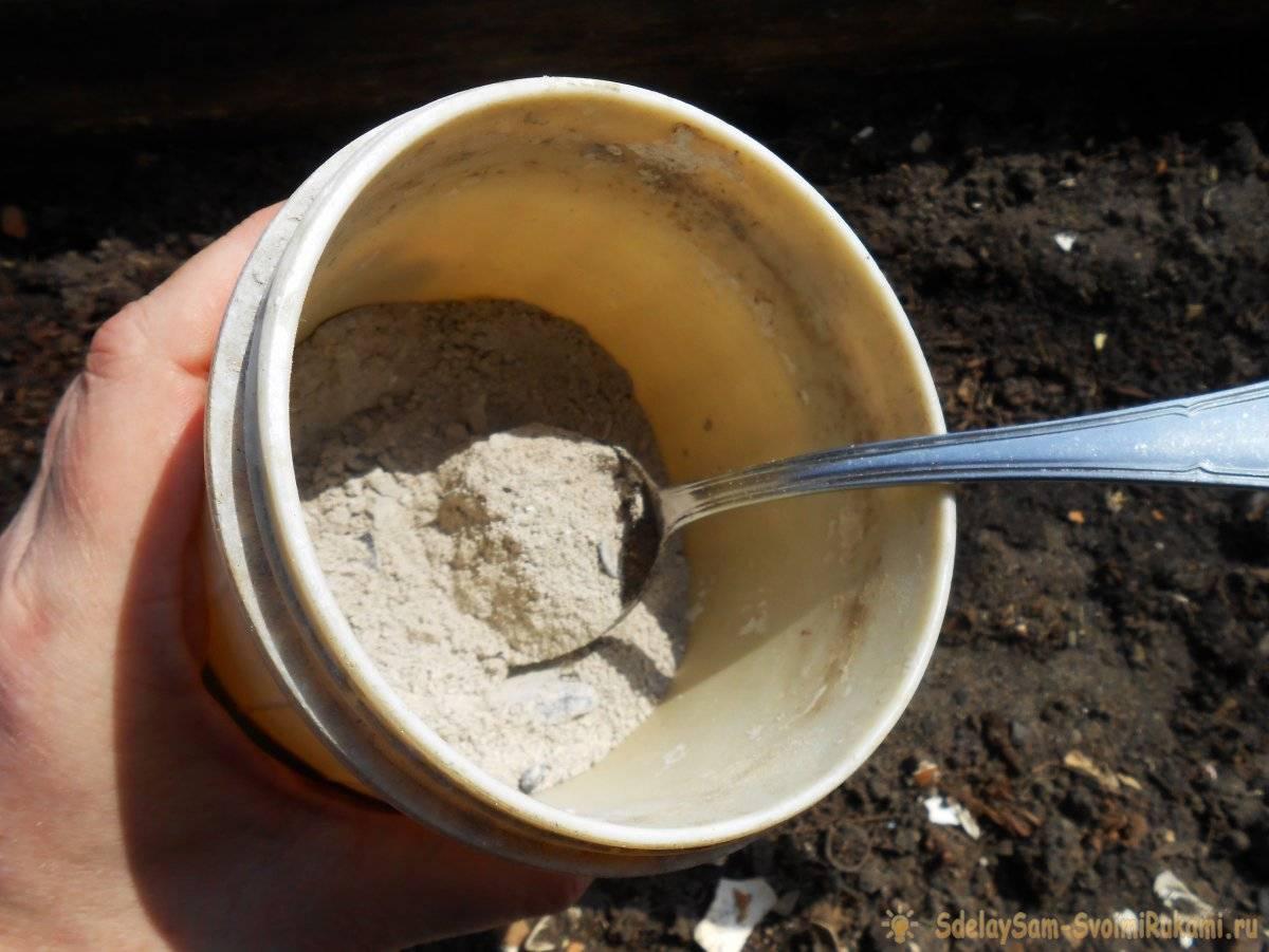 Три проверенных подкормки чеснока весной и летом для большой урожайности