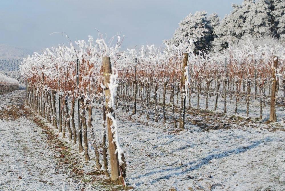 Как противостоять весенним заморозкам? 4 действенных метода