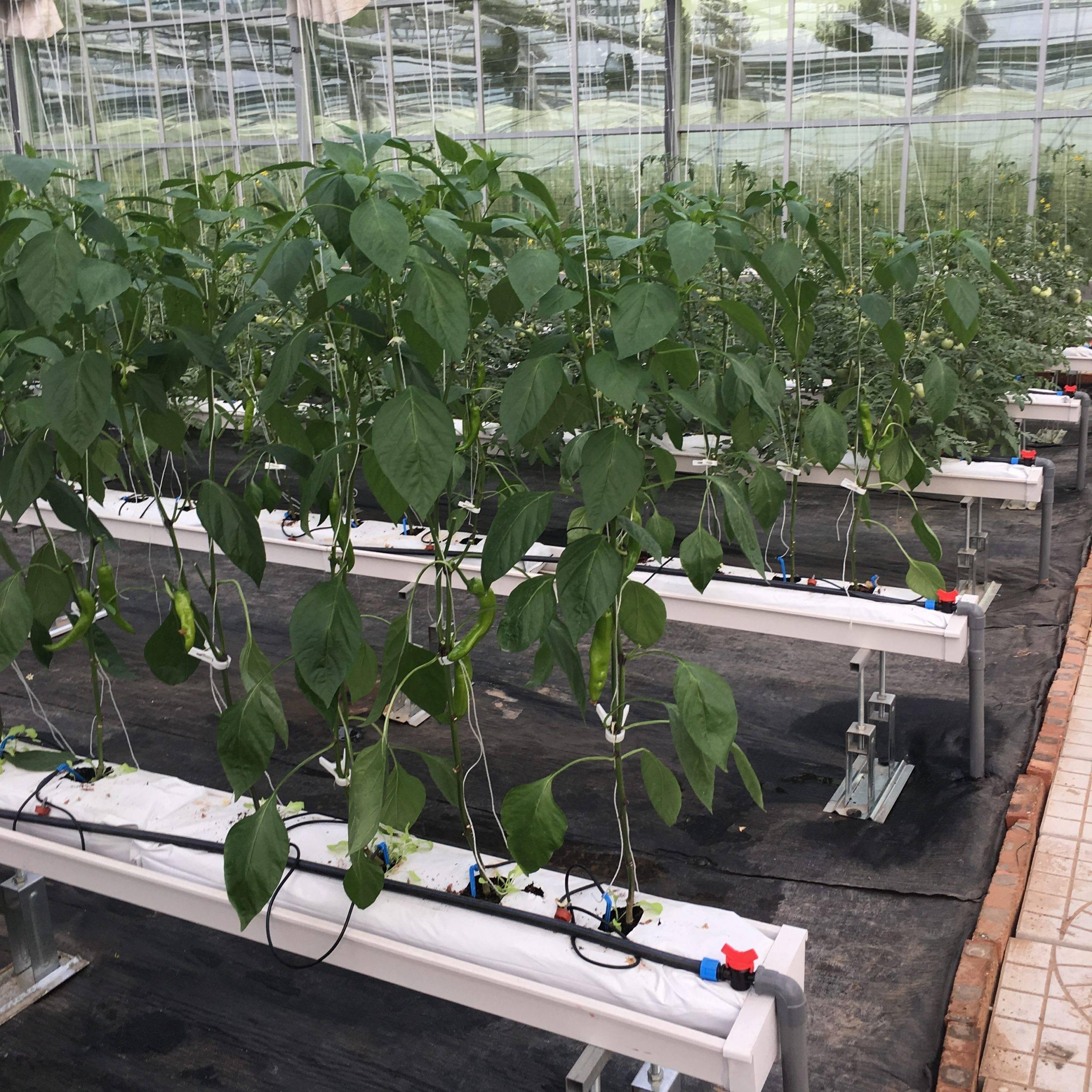 Огурцы на гидропонике: посев, посадка и выращивание.