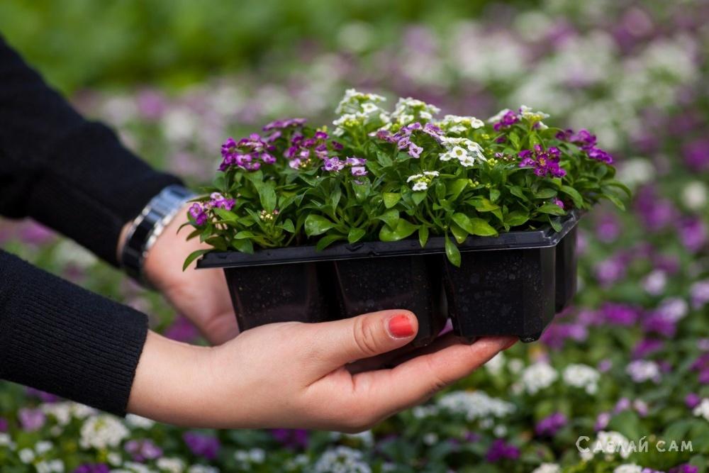 5 однолетних цветов, которые нужно посеять в апреле
